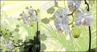Orchidee Vektor Werkstoff