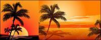 Kokos-Vektor beeinflussen das Sonnenuntergang am Meer-material