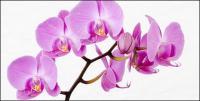Orquídeas blancas imagen material-3