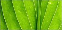 緑の葉、クローズ アップ絵背景素材