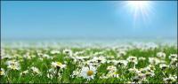 Matériau de tableau blanc sauvages chrysanthème