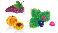 Vários materiais de vetor frutos comum