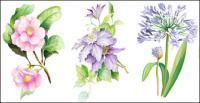 7 ฉลาด watercolor ดอกไม้เวกเตอร์วัสดุ