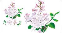 Hierbas medicinales chinas - Lila vector original