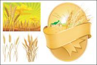 Weizen Thema Vektor des Materials