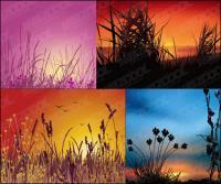 Paysages du coucher du soleil de vecteur