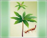 Vector planta