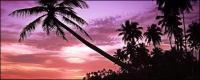 Matériel de vidéo image de noix de coco seaside crépuscule