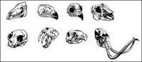 移動メディアの生産のベクター素材 - 動物の頭蓋骨