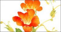 Aquarell von Blumen-Ergebnisse