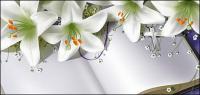 Buku dan lily