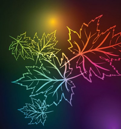 beautiful maple leaf background vector